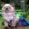 "Britney Spears' ""I'm A Slave 4 U"" Performed By A Cat"