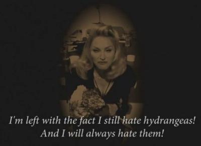 Madonna Hydrangea video