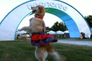 Bonnaroo 2013 Dates Revealed Via Dancing Dog: Watch