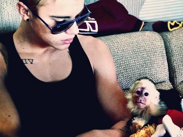 justin-bieber-monkey