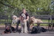 "All's Fair In Love And Dog-Walking! Watch Timeflies And Natalie La Rose's ""Worse Things Than Love"" Video"