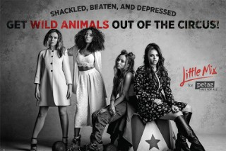 Little Mix Pose For New peta2 Advertisement: Morning Mix