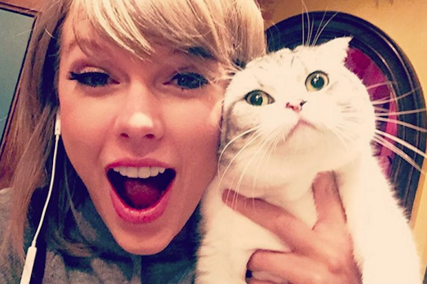 taylor-swift-cat-instagram-2015