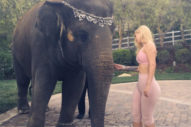 Iggy Azalea Pets An Elephant At French Montana's Party: Guess They're Dating